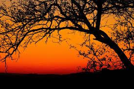 Música relajante étnica 2 imagen de anochecer en África