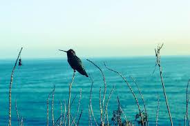 Música relajante blues 4 imagen de pájaro con mar de fondo