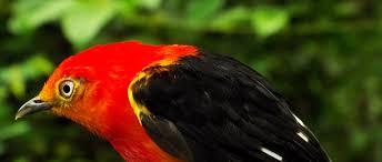 Música relajante bossa nova 8 imagen de pájaro