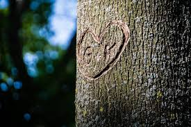 Música relajante romántica 9 imagen de corazón en árbol